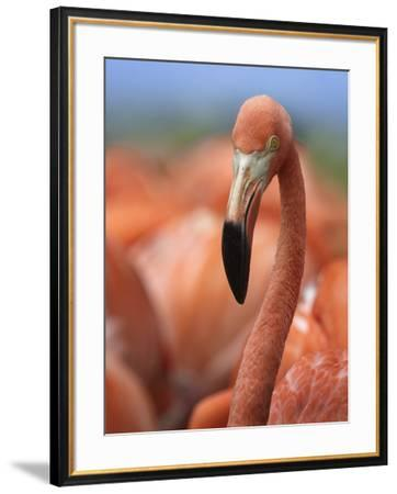 Portrait of a Caribbean Flamingo, Singapore-Tim Fitzharris-Framed Photographic Print