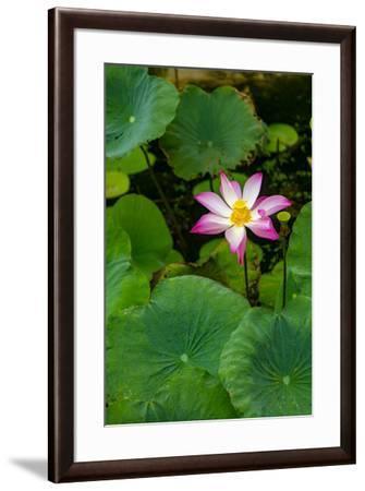Lotus Blossom Flower, Ving Trang Pagoda, Vietnam, Asia-Douglas Peebles-Framed Premium Photographic Print