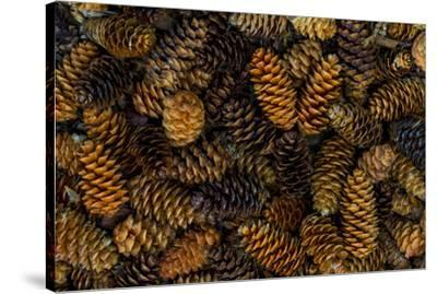 Canada, Yukon Territory, Kluane National Park. Close-up of spruce cones.-Jaynes Gallery-Stretched Canvas Print
