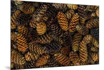 Canada, Yukon Territory, Kluane National Park. Close-up of spruce cones.-Jaynes Gallery-Mounted Premium Photographic Print
