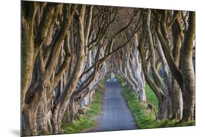 Ireland, County Antrim, Ballymoney, The Dark Hedges road-Walter Bibikow-Mounted Premium Photographic Print