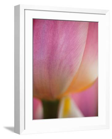 Netherlands, Macro of Colorful Tulip-Terry Eggers-Framed Photographic Print