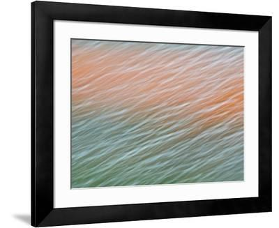 Netherlands, Nord Holland, Tulips and Rain Drops in Patterns-Terry Eggers-Framed Photographic Print