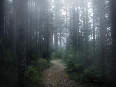 The Forest of Secrets-Christian Lindsten-Framed Photographic Print
