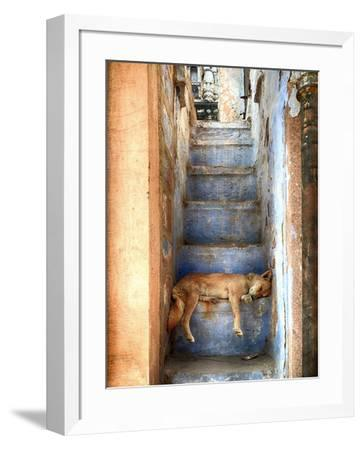 Nap Time-Roxana Labagnara-Framed Photographic Print