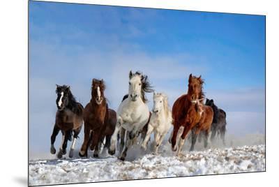 Mongolia Horses-Libby Zhang-Mounted Photographic Print