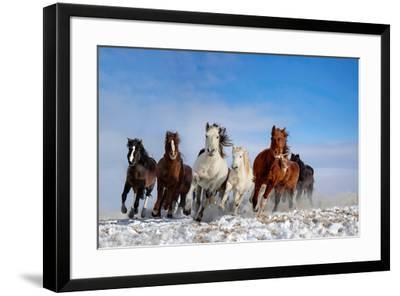 Mongolia Horses-Libby Zhang-Framed Photographic Print
