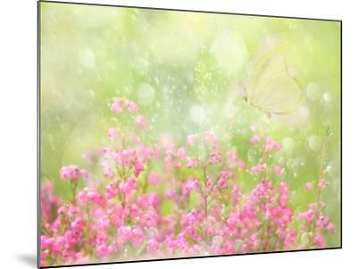 It's a Beautiful Day-Delphine Devos-Mounted Photographic Print