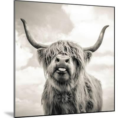 Close up portrait of Scottish Highland cattle on a farm-Mark Gemmell-Mounted Photographic Print