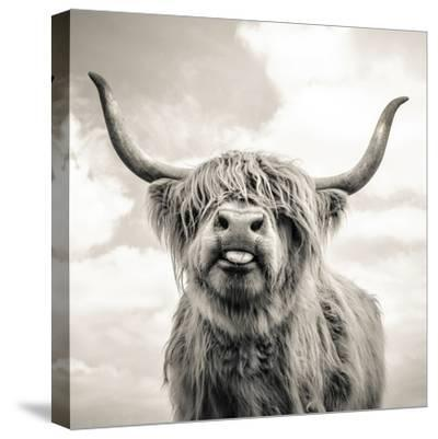 Close up portrait of Scottish Highland cattle on a farm-Mark Gemmell-Stretched Canvas Print