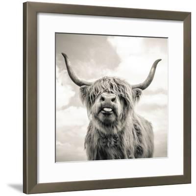 Close up portrait of Scottish Highland cattle on a farm-Mark Gemmell-Framed Premium Photographic Print
