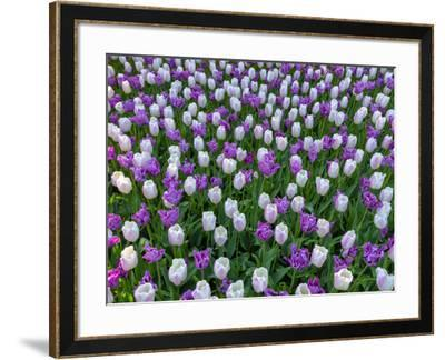 Violet and White Delight-Marco Carmassi-Framed Photographic Print