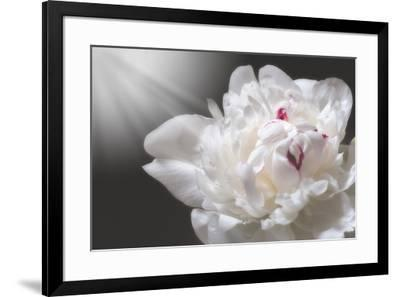 White Beauty-Philippe Sainte-Laudy-Framed Photographic Print