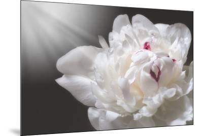 White Beauty-Philippe Sainte-Laudy-Mounted Photographic Print