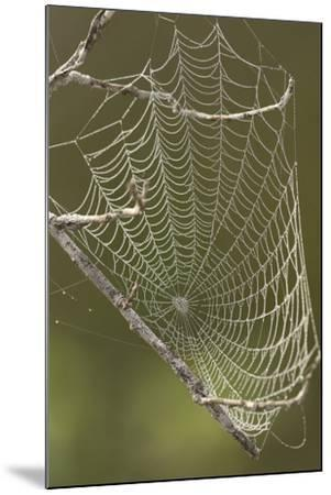 Morning dew on a spider web.-Cagan H. Sekercioglu-Mounted Photographic Print