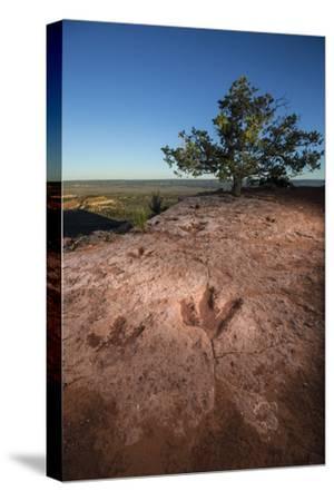 Theropod tracks cross Flag Point near Kanab.-Cory Richards-Stretched Canvas Print