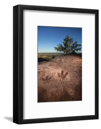 Theropod tracks cross Flag Point near Kanab.-Cory Richards-Framed Photographic Print