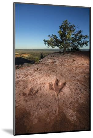 Theropod tracks cross Flag Point near Kanab.-Cory Richards-Mounted Photographic Print