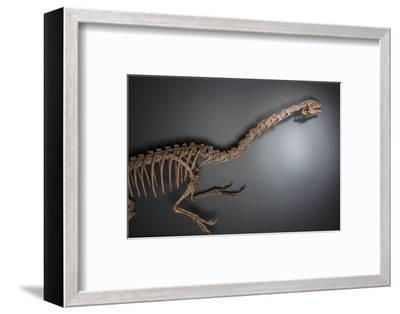 A dinosaur from the Late Cretaceous period at the Natural History Museum of Utah.-Cory Richards-Framed Photographic Print