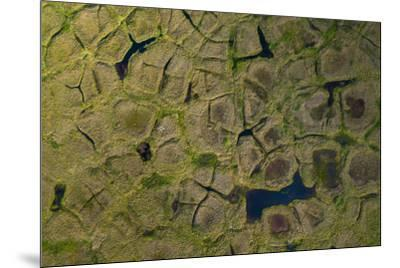 Natural polygonal shapes appear across the tundra landscape as a result of permafrost melt-Jeffrey Kerby-Mounted Photographic Print