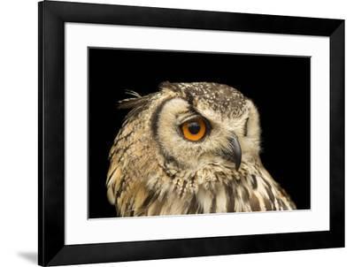 A rock eagle owl, Bubo bengalensis, at the Plzen Zoo.-Joel Sartore-Framed Photographic Print
