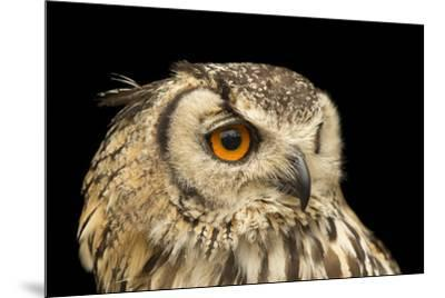 A rock eagle owl, Bubo bengalensis, at the Plzen Zoo.-Joel Sartore-Mounted Photographic Print