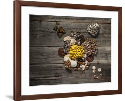 An assortment of popular mushrooms.-Rebecca Hale-Framed Photographic Print