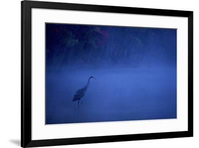 A great blue heron stands in Walden Pond as snow falls at dusk.-Tim Laman-Framed Photographic Print