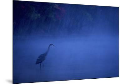 A great blue heron stands in Walden Pond as snow falls at dusk.-Tim Laman-Mounted Photographic Print