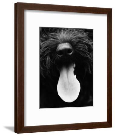 Dog Panting-Henry Horenstein-Framed Photo