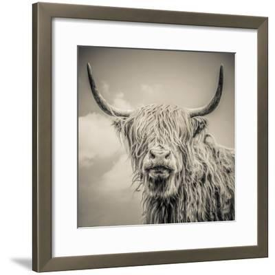 Highland Cattle-Mark Gemmell-Framed Photographic Print
