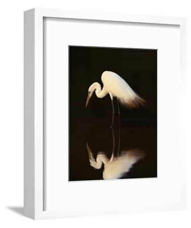 Great Egret in Lagoon, Pantanal, Brazil-Frans Lanting-Framed Premium Photographic Print