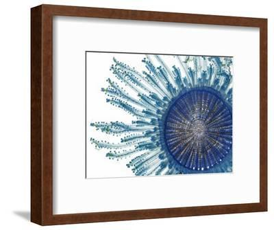 The Pigment of a Blue Button Jellyfish Blocks Ultraviolet Rays-David Liittschwager-Framed Premium Photographic Print