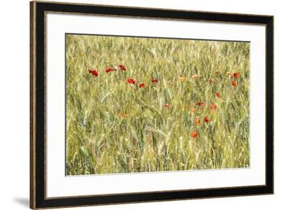 France Provence Collection - Wheat Field-Philippe Hugonnard-Framed Photographic Print