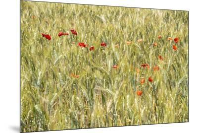 France Provence Collection - Wheat Field-Philippe Hugonnard-Mounted Photographic Print