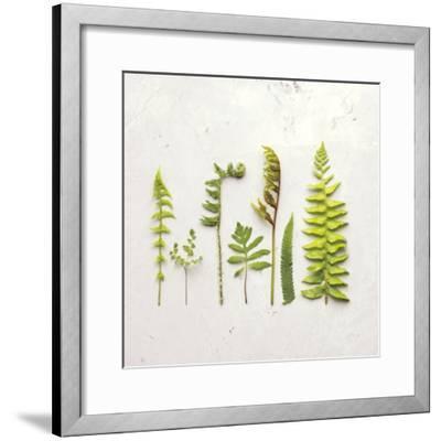 Flat Lay Ferns IV-Felicity Bradley-Framed Art Print