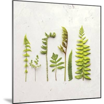Flat Lay Ferns IV-Felicity Bradley-Mounted Art Print