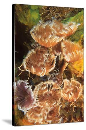 Northern Bahamas, Caribbean-Stuart Westmorland-Stretched Canvas Print