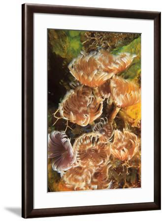 Northern Bahamas, Caribbean-Stuart Westmorland-Framed Photographic Print