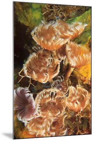 Northern Bahamas, Caribbean-Stuart Westmorland-Mounted Photographic Print