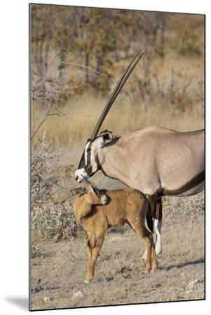 Oryx and young Etosha National Park, Namibia-Darrell Gulin-Mounted Photographic Print
