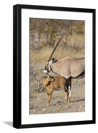 Oryx and young Etosha National Park, Namibia-Darrell Gulin-Framed Photographic Print