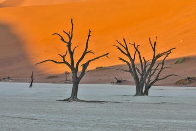 Africa, Namibia, Sossusvlei. Dead Acacia Trees in the White Clay Pan at Deadvlei in the Morning Lig-Hollice Looney-Framed Photographic Print