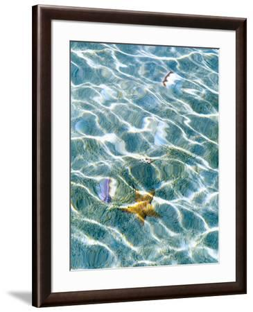 Underwater view of sea star and seashells, Bahamas-Stuart Westmorland-Framed Photographic Print