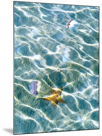 Underwater view of sea star and seashells, Bahamas-Stuart Westmorland-Mounted Photographic Print