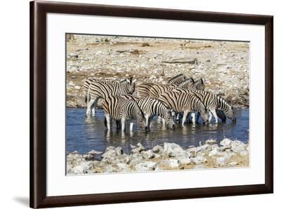 Africa, Namibia, Etosha National Park, Zebras at the Watering Hole-Hollice Looney-Framed Photographic Print