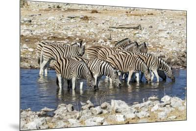 Africa, Namibia, Etosha National Park, Zebras at the Watering Hole-Hollice Looney-Mounted Photographic Print