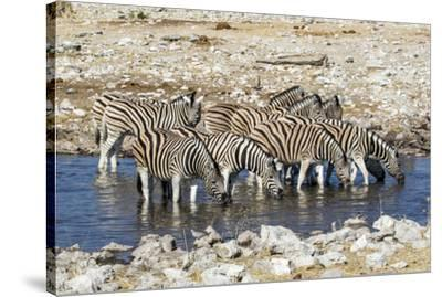 Africa, Namibia, Etosha National Park, Zebras at the Watering Hole-Hollice Looney-Stretched Canvas Print