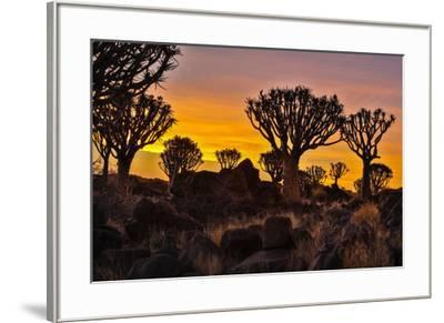 Africa, Namibia, Keetmanshoop, sunset at the Quiver tree Forest at the Quiver tree Forest Rest Camp-Hollice Looney-Framed Photographic Print