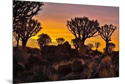 Africa, Namibia, Keetmanshoop, sunset at the Quiver tree Forest at the Quiver tree Forest Rest Camp-Hollice Looney-Mounted Photographic Print